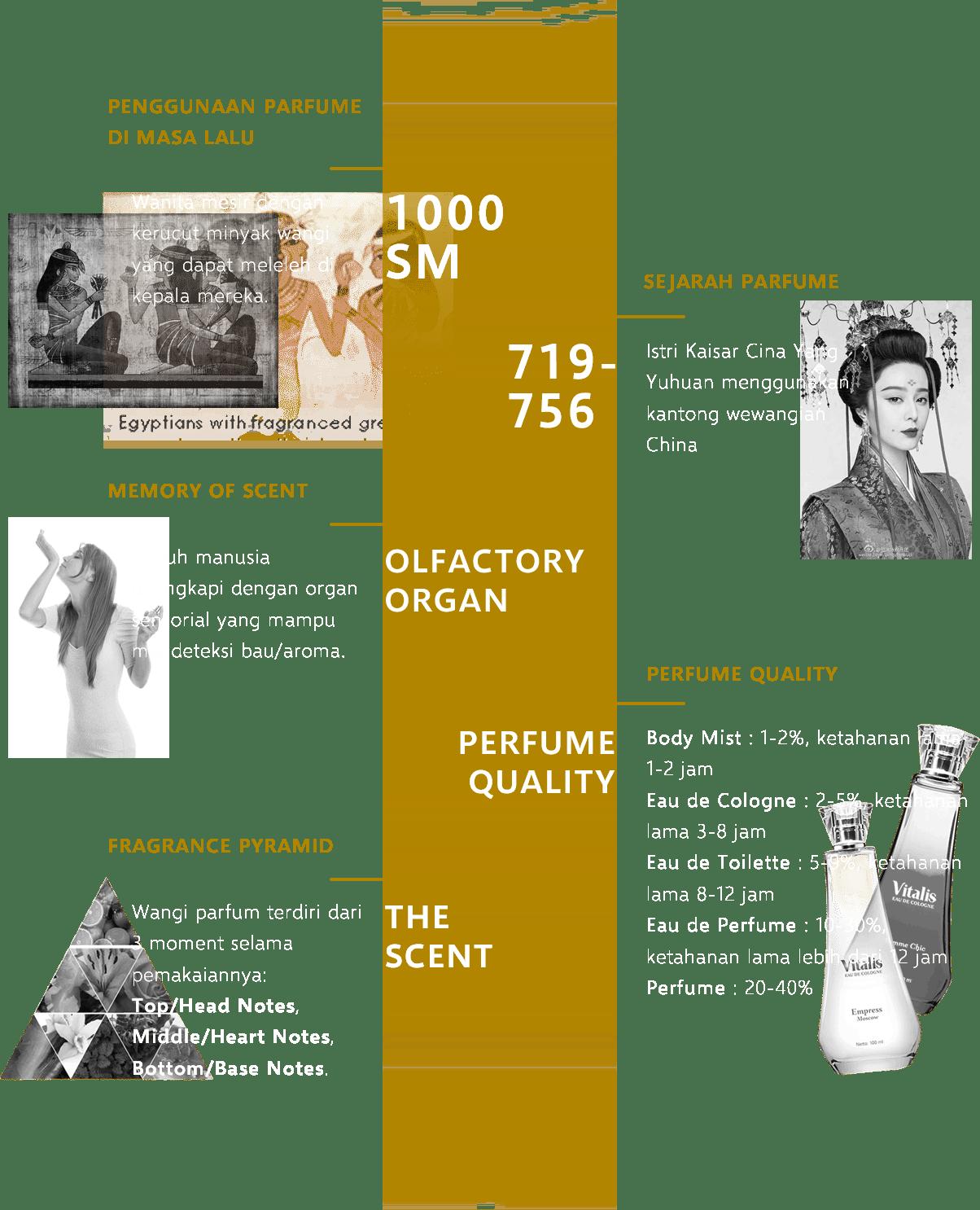 Perfume Infographic