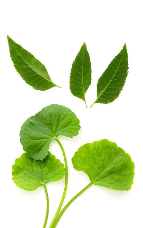 Kenal Lebih Dekat dengan Manfaat Neem Leaf dan Gotu Kola untuk Kulit